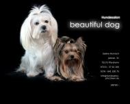 Bild Hundesalon beautiful dog, Sabine Hornisch
