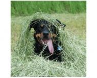 Bild Hunde-Zirkel